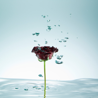 Single Object「Rose, stem standing in water, droplets of water in mid-air, close-up」:スマホ壁紙(4)