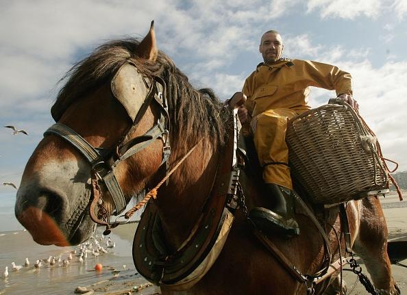 Fisherman「Oostduinkerke's Shrimp Fishermen On Horseback」:写真・画像(11)[壁紙.com]