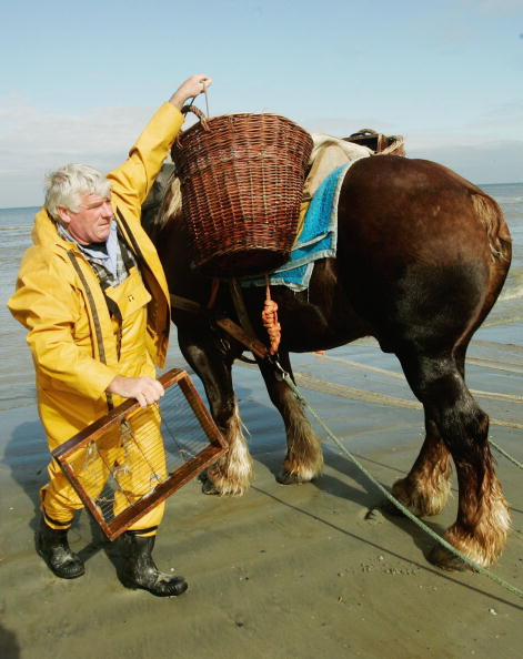 Fisherman「Oostduinkerke's Shrimp Fishermen On Horseback」:写真・画像(19)[壁紙.com]