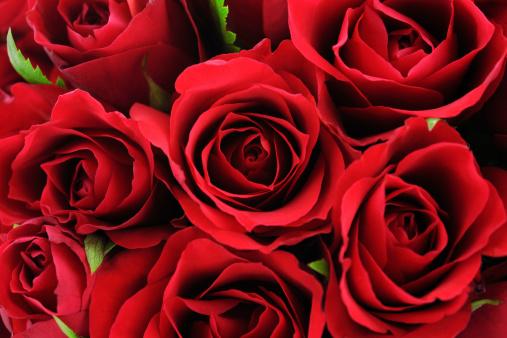 バレンタイン「レッドのワイルドローズの背景」:スマホ壁紙(0)