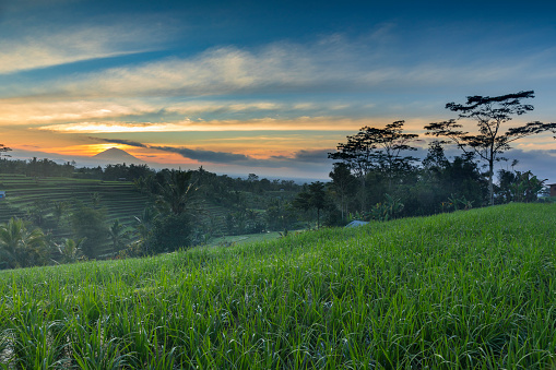 Mt Agung「火山を背景にバリ島の水田米フィールド日の出」:スマホ壁紙(2)