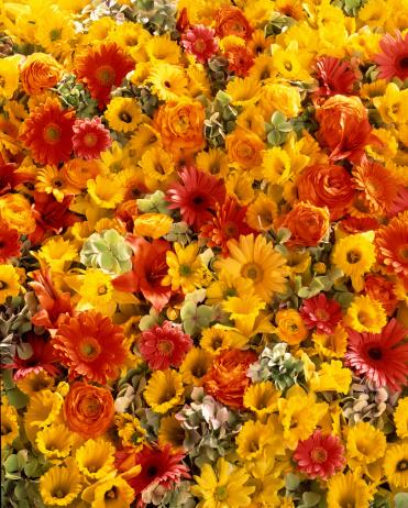 水仙「Colorful flowers」:スマホ壁紙(11)