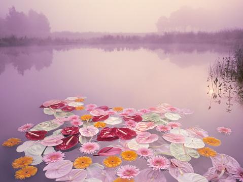 Purple「Colorful flowers floating in lake at misty dawn」:スマホ壁紙(16)