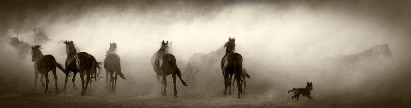 Animal Mane「Running Horses」:スマホ壁紙(17)