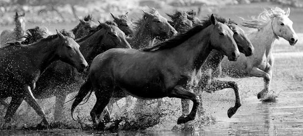 Stallion「Running Horses」:スマホ壁紙(15)