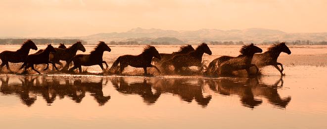 Horse「Running Horses on a lake」:スマホ壁紙(1)