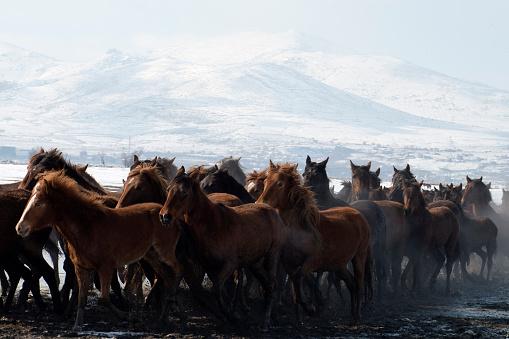 Stallion「Running Horses on a lake」:スマホ壁紙(18)