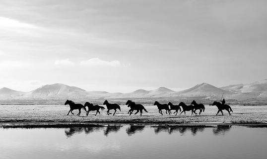Stallion「Running Horses on a lake」:スマホ壁紙(1)