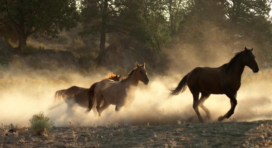 Horse「Running horses w/kicked up backlit dust」:スマホ壁紙(2)