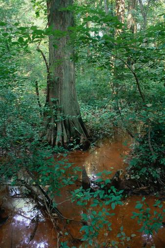 Battle「LIQAS086 Battle Creek Cypress Swamp, MD」:スマホ壁紙(0)