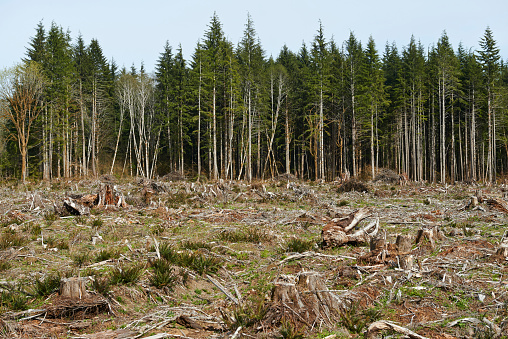 Deforestation「Remnants of a forest that has been logged and deforested in Washington State」:スマホ壁紙(4)