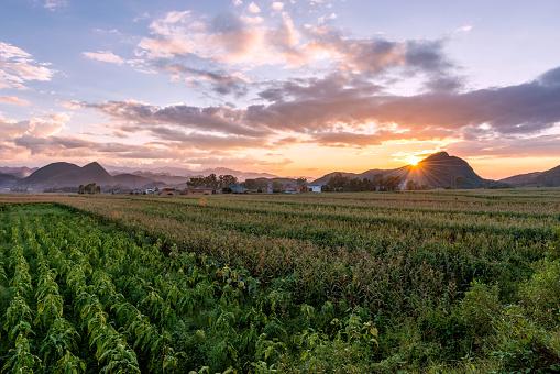 Indigenous Culture「Yunnan Province tobacco plantation,China」:スマホ壁紙(13)