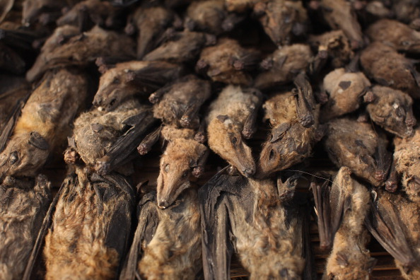 Animal「Benin's Mysterious Voodoo Religion Is Celebrated In Its Annual Festival」:写真・画像(18)[壁紙.com]