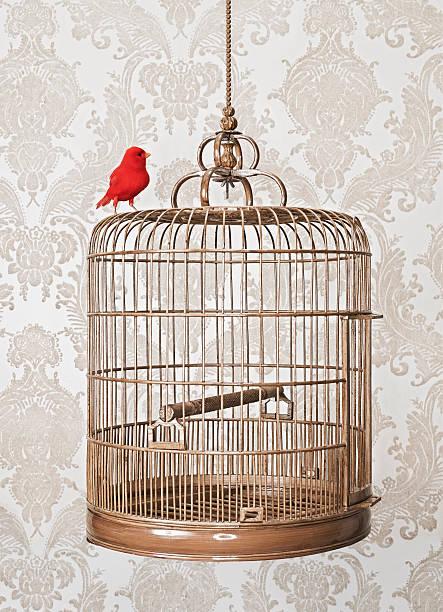 Red Bird Perched on exterior of birdcage:スマホ壁紙(壁紙.com)