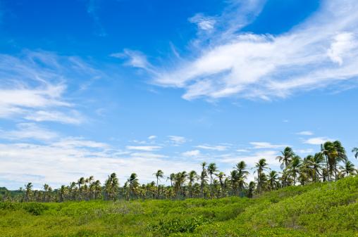 Loneliness「Caribbean beach tropical forest」:スマホ壁紙(15)