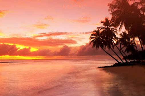 Beach「Caribbean, Barbados, pristine beach」:スマホ壁紙(6)