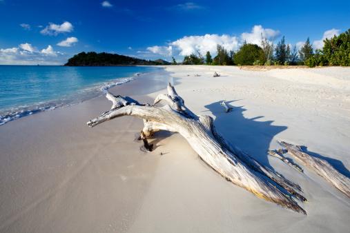 リーワード諸島 アンティグア「カリブ海のビーチ、ドリフトウッド」:スマホ壁紙(14)