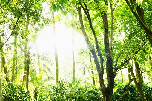 Frond「Forest in sunlight」:スマホ壁紙(19)