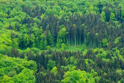 春「Forest in Spring」:スマホ壁紙(17)