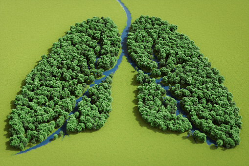 Ecosystem「Forest In Shape Of Lungs」:スマホ壁紙(1)