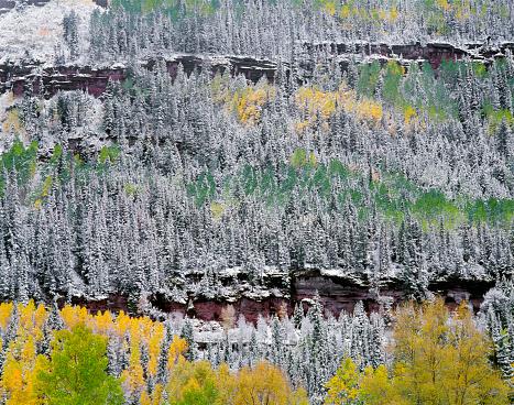 アンコンパグレ国有林「Forest in snow, San Juan Range Mountains, Uncompahgre National Forest, Colorado, USA」:スマホ壁紙(6)