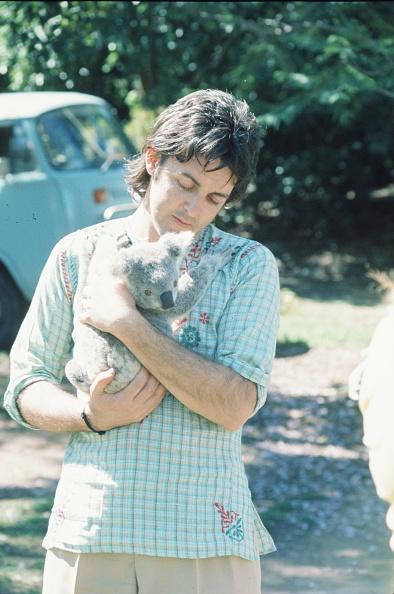 Koala「Paul McCartney With Koala」:写真・画像(19)[壁紙.com]