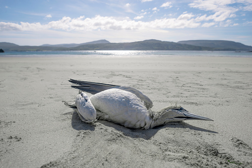 自生「Dead sea bird on expanse of beach」:スマホ壁紙(9)