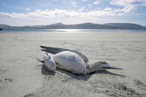 質感「Dead sea bird on expanse of beach」:スマホ壁紙(5)