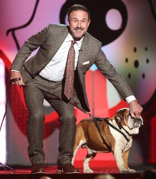 Awe「Fox's Cause For Paws: An All-Star Dog Spectacular - Show」:写真・画像(19)[壁紙.com]