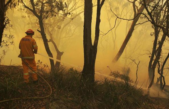 Back Lit「Bush-Fire Season Begins In Sydney」:写真・画像(12)[壁紙.com]