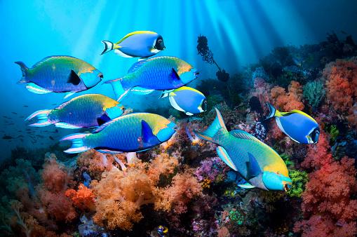 Ecosystem「Parrotfish and soft corals」:スマホ壁紙(1)