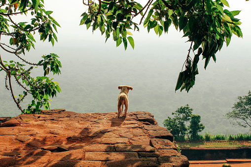 Sri Lanka「Wild Puppy Enjoying the View in Sri Lanka」:スマホ壁紙(7)