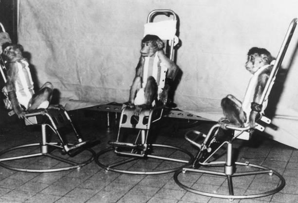 Space Monkeys:ニュース(壁紙.com)