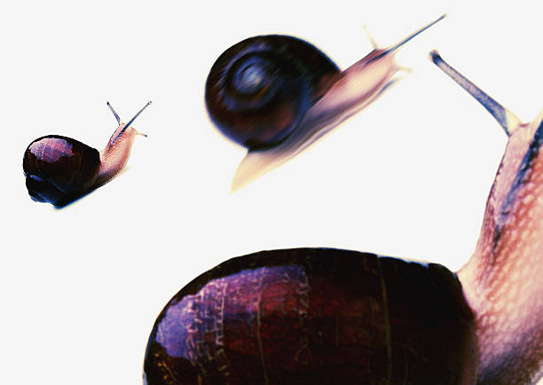 Three Snails:スマホ壁紙(壁紙.com)