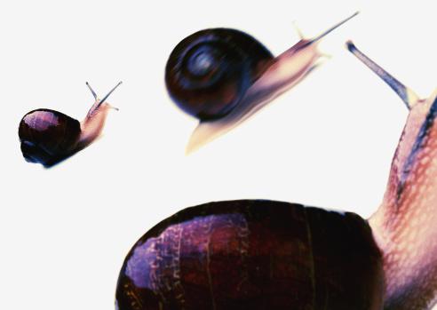 カタツムリ「Three Snails」:スマホ壁紙(5)