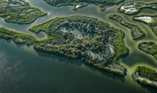 Gulf Coast States「USA, Florida, Aerial photograph of mangroves and sandbars along the western coastline of Tampa Bay」:スマホ壁紙(15)