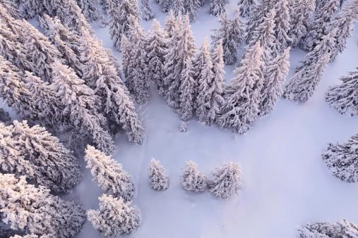 雪「ホワイトの森」:スマホ壁紙(9)