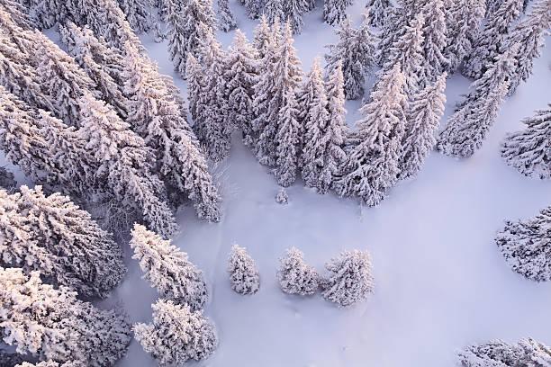 ホワイトの森:スマホ壁紙(壁紙.com)