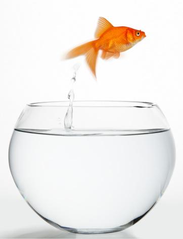 Goldfish「Goldfish」:スマホ壁紙(12)
