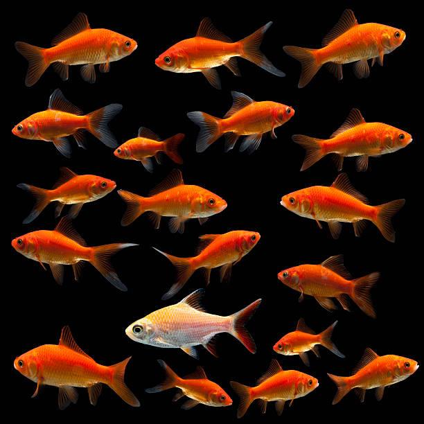 Goldfish:スマホ壁紙(壁紙.com)