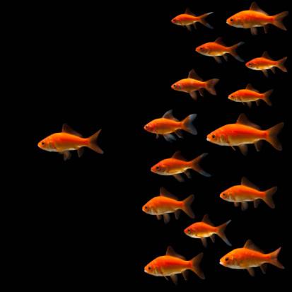 Large Group Of Animals「Goldfish」:スマホ壁紙(16)