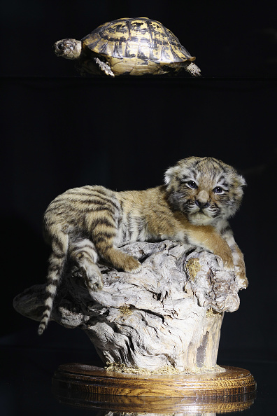 Stuffed「Specimens In The Metropolitan Police's Illegal Trade In Endangered Species Exhibition」:写真・画像(7)[壁紙.com]