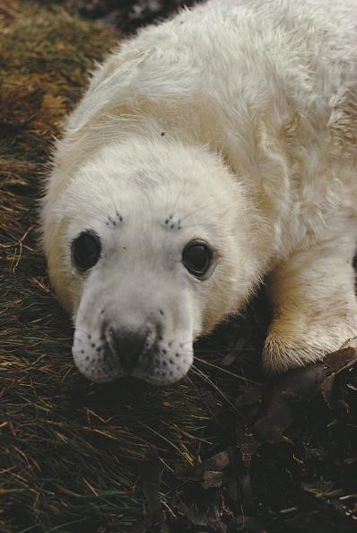 イネ科「Grey Seal」:写真・画像(3)[壁紙.com]