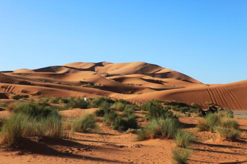 Camel Family「Sand dunes,camel and tent in Sahara desert, Morocco, Africa」:スマホ壁紙(16)