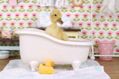 Floral Pattern「Baby duck in a bath tub」:スマホ壁紙(8)