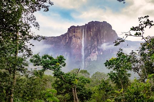 Rainforest「Angel falls, Canaima National Park, Venezuela」:スマホ壁紙(5)