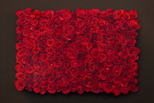 Rectangle「red roses」:スマホ壁紙(13)