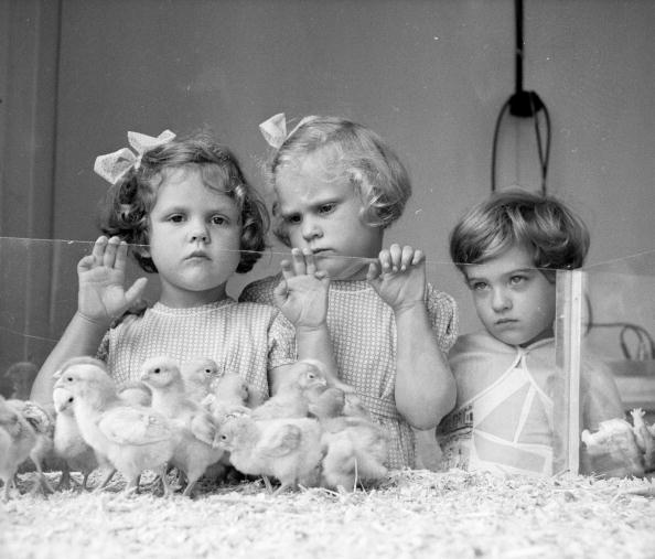 Easter「Watching The Chicks」:写真・画像(14)[壁紙.com]