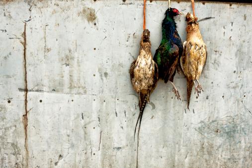 ガラス「Hanging pheasants」:スマホ壁紙(1)