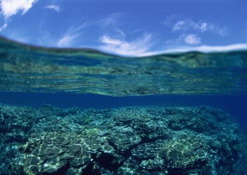 Water Surface「Shelf of coral」:スマホ壁紙(7)